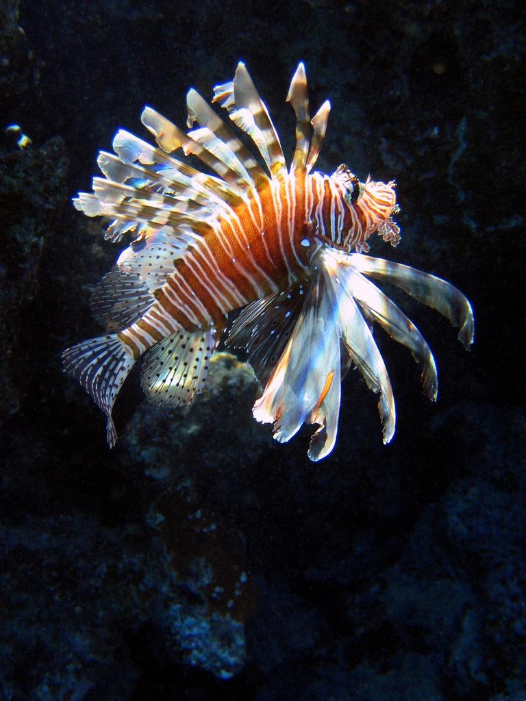 Egitto egittiamo blog sull 39 egitto e localit del mar - Pagina di colorazione del pesce ...