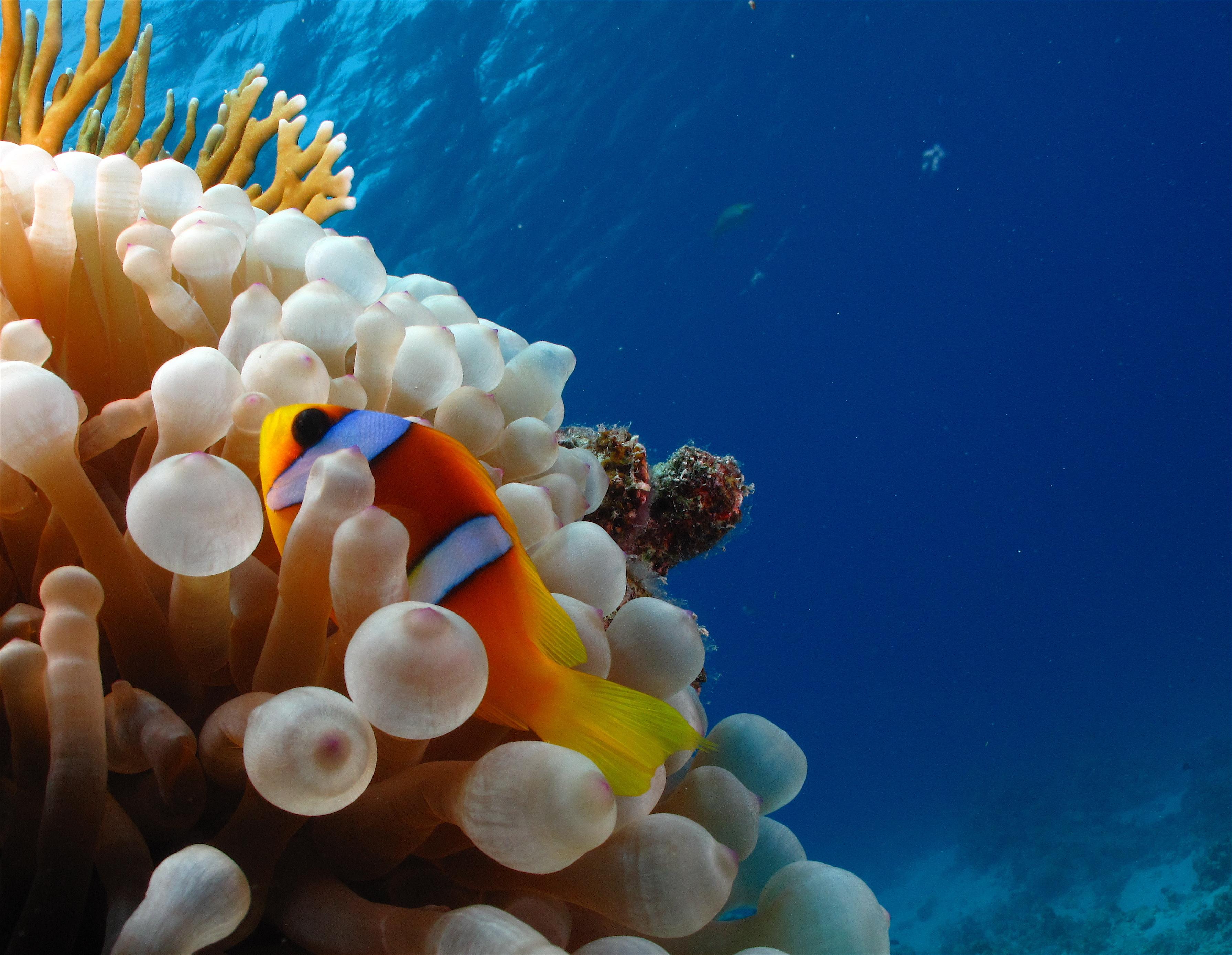 Pesci del mar rosso egittiamo blog sull 39 egitto e for Immagini coralli marini